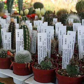 """Бирки """"колышек"""" на растения 136 х 20 мм, материал PET : Gera-Trade"""